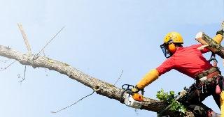 Спил деревьев в Москве цена от 593 руб.