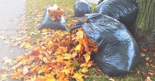 Уборка листьев в Москве цена от 699 руб.
